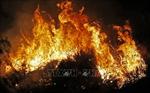 Nướng thịt gây cháy rừng, sinh viên Italy bị phạt 30 triệu USD
