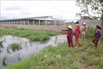 Trang trại hàng chục ngàn con vịt xả thải ra kênh Bàu Gòng gây ô nhiễm nguồn nước