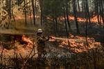 Bồ Đào Nha đã kiểm soát được các đám cháy rừng lớn ở miền Trung