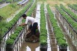 Làng hoa Sa Đéc 'trình làng' hàng trăm giống hoa mới phục vụ Tết 2020