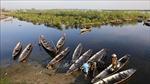 Rừng ngập mặn ở Thừa Thiên-Huế
