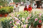 Tình hình ở xã Đồng Tâm đã ổn định, nhân dân vui xuân đón Tết
