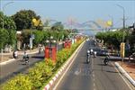 Độc đáo con đường hoa mai ở Bà Rịa - Vũng Tàu