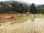 Nông dân xuống đồng sản xuất vụ xuân