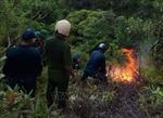 Cơ bản dập tắt đám cháy rừng ở núi Sọ, khoảng 10 ha rừng, cây bụi bị thiêu rụi