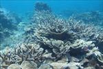 Hành động vì thiên nhiên và Đổi mới vì một đại dương bền vững