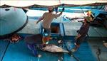Ứng dụng tiến bộ kỹ thuật trên tàu khai thác thủy sản xa bờ