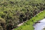 Đất ngập nước chống biến đổi khí hậu - Bài 2: Các hoạt động làm suy thoái đất ngập nước