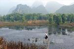 Đất ngập nước chống biến đổi khí hậu- Bài cuối: Giải pháp bảo vệ hiệu quả