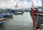Bình Định công bố 2 cảng cá loại II