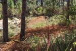 Cưỡng chế, thu hồi 3.600 m2 đất rừng bị lấn chiếm tại Đà Lạt