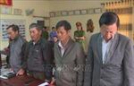 Khởi tố, bắt tạm giam 4 lãnh đạo, cán bộ liên quan đến vụ phá rừng tại Đắk Lắk