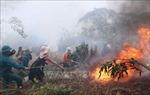 Phòng chống cháy rừng mùa khô hanh