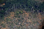 Nạn phá rừng tại Brazil tăng lên mức cao nhất trong 12 năm qua