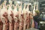 Các tỉnh, thành phía Nam đảm bảo nguồn cung thịt lợn
