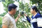 Kỳ công chuẩn bị 'áo mới' cho nông sản Tết Tân Sửu 2021