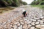Trên 15 tỷ đồng phòng, chống hạn mặn ven biển Gò Công