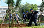 Lâm Đồng khởi động trồng 50 triệu cây xanh