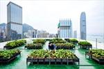 Vườn trên nhà cao tầng giúp kết nối con người và giảm rác thải