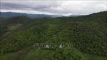 Chủ động ngăn chặn phá rừng làm nương rẫy