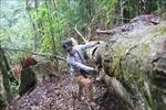 Phản hồi thông tin TTXVN: Lâm Đồng điều tra, xử lý nghiêm các vụ vi phạm về quản lý bảo vệ rừng