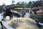 Tàu đánh bắt hải sản gần bờ ở các 'vùng xanh'Bà Rịa-Vũng Tàu được ra khơi