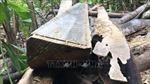 Vụ phá rừng Minh Long (Quảng Ngãi): Lời giải thích có hợp lý?