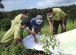 Kon Tum đặt mục tiêu sớm hoàn thành trồng mới 15.000 ha rừng