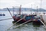 Tiêu hủy tàu thuyền vi phạm, vô chủ trên vịnh Hạ Long