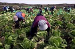 Xuất khẩu nông sản Hàn Quốc sang ASEAN đạt 680 triệu USD trong nửa đầu năm nay