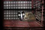 Phát hiện trên 50 cá thể động vật hoang dã tại nhà hàng