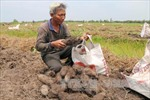 Tháo rửa chua phèn, lão nông cần mẫn làm giàu trên vùng Đồng Tháp Mười