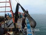 Gia tăng tình trạng khai thác giã cào trên biển và đầm phá