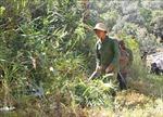 Nguy cơ cháy rừng rất cao tại Đắk Lắk
