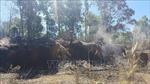 Cháy hơn 10 ha rừng thông có thể do bất cẩn vứt tàn thuốc lá