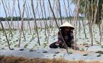 Chương trình hành động phát triển bền vững Đồng bằng sông Cửu Long thích ứng với biến đổi khí hậu