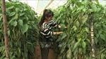 Tu nghiệp sinh nông nghiệp Việt Nam tại Israel - Bài 1: Cơ hội từ ý thức chăm chỉ