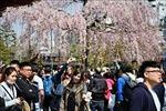 Tháng 7, lượng du khách Việt Nam tới Nhật Bản tăng 21,8%