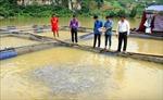 Phát triển kinh tế vùng tái định cư thủy điện