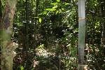 Nam thanh niên dính đạn tử vong khi dùng súng săn đánh rắn