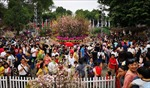 Lễ hội Hoa anh đào Nhật Bản - Hà Nội 2020 sẽ có nhiều hoạt động phong phú