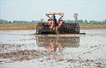 Long An nhiều giải pháp để đạt hơn 2,7 triệu tấn lúa năm 2020