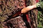 Thực hiện đóng cửa rừng tự nhiên - Bài 3: Giải bài toán giữ rừng