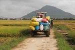 Thị trường nông sản tuần qua: Các mặt hàng có diễn biến trái chiều