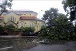 Bão số 5 đổ bộ vào Thừa Thiên - Huế gây mưa lớn, quật đổ nhiều cây xanh