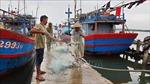 Quảng Nam: Nghiêm cấm tàu thuyền ra khơi; khẩn trương chằng chống nhà cửa