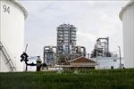 Giá dầu thế giới ổn định trong phiên giao dịch 16/9