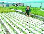 Phát triển nông nghiệp hữu cơ - Bài cuối: Xây dựng chiến lược phát triển dài hạn