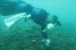 Phục hồi thành công san hô tại Côn Đảo