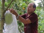 Làm giàu nhờ chuyển đổi cây trồng thích ứng biến đổi khí hậu
